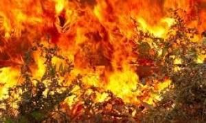 Συνάντηση εργασίας για τις δασικές πυρκαγιές