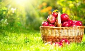 5 τροφές κατά της χοληστερίνης