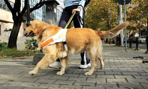 Η άγνοια, η ταβέρνα και ο σκύλος οδηγός στην Ελλάδα του σήμερα