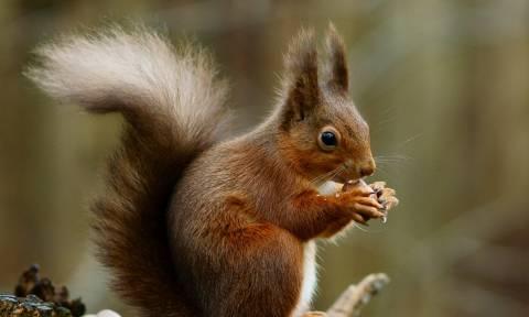 Ένας σκίουρος με τρόπους (video)
