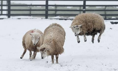 Ο Θαυμαστός Κόσμος των ζώων (photos)