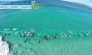 Δελφίνια… σερφάρουν πάνω στα κύματα (Video)