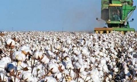 ΝΔ: Ο εμπαιγμός των βαμβακοπαραγωγών δεν έχει όρια