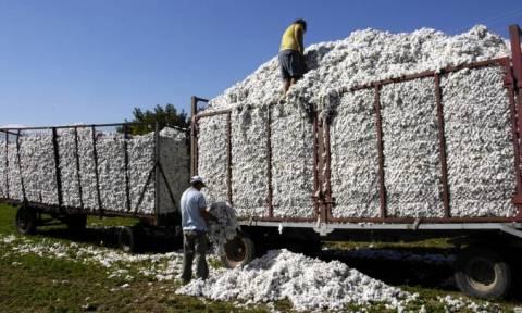 Την Τρίτη η συνδεδεμένη ενίσχυση στους βαμβακοπαραγωγoύς