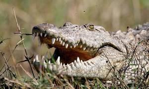 Κροκόδειλος κατασπάραξε άνθρωπο μπροστά στα μάτια τουριστών