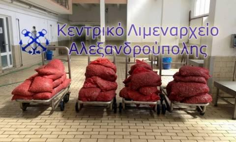 Αλεξανδρούπολη: Κατασχέθηκε μεγάλη ποσότητα ακατάλληλων οστράκων (pic)