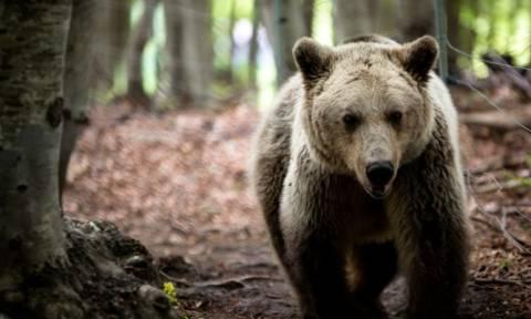 Ο ερχομός της Άνοιξης «ξυπνάει» τις αρκούδες (Photos)