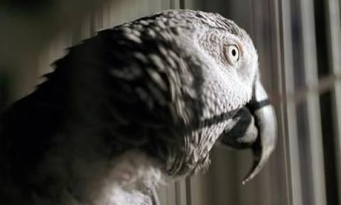 Η ομογενής που σώζει πτηνά από την κατάθλιψη!