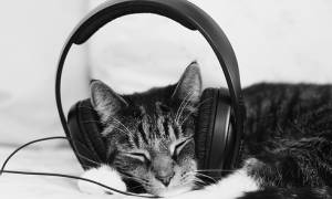 Έφτιαξαν μουσική για γάτες (audio)