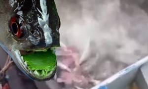 Σε αυτή τη λίμνη της Βραζιλίας η βουτιά δεν είναι καλή ιδέα! (video)