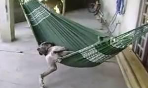 Αυτός είναι ο  πιο… αραχτός σκύλος του πλανήτη! (video)