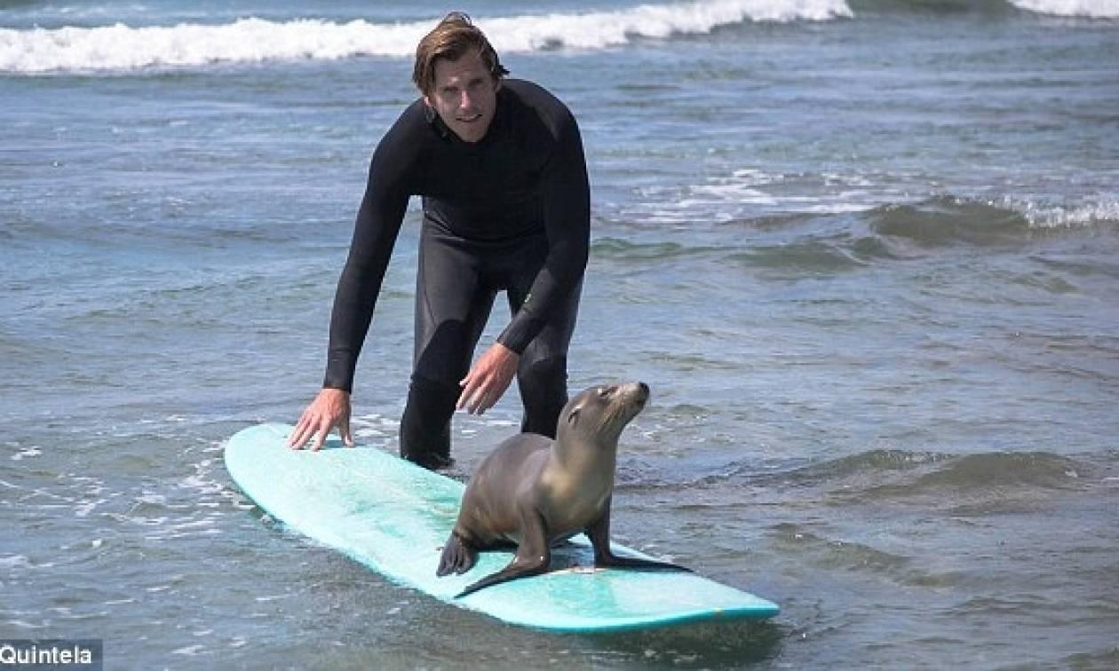 Surf παρέα με μια μικρή φώκια (photos)