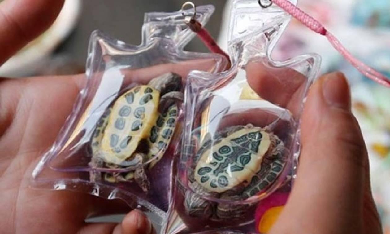 Κίνα: Ζωάκια πωλούνται σε πλαστικές θήκες για μπρελόκ - Διαμαρτύρονται οι φιλοζωικές!