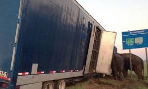 Φορτηγό-θηρίο γλιτώνει την ανατροπή χάρη σε... ελέφαντες (vid)