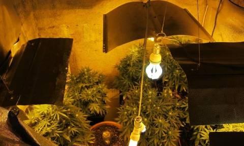 Συλλήψεις για καλλιέργεια χασίς (Photos)