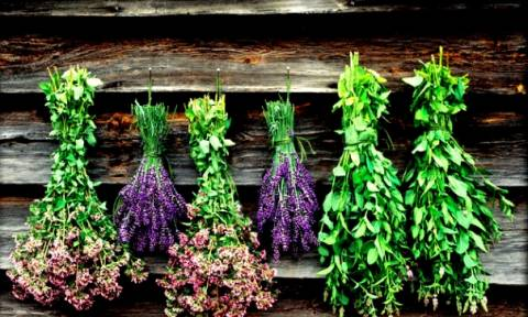 Τάση ή ανάγκη τα αρωματικά και θεραπευτικά φυτά