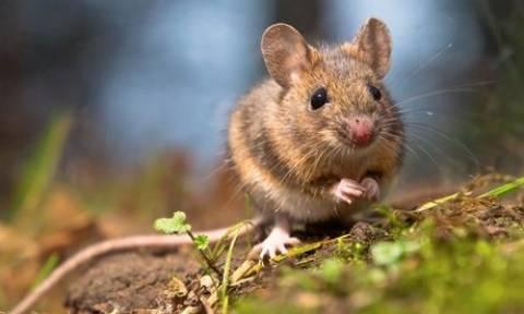 Εισβολή… ποντικών στο δημαρχείο της Κοζάνης
