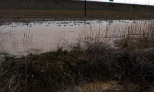 Πλημμύρισαν χωράφια και δρόμοι στην Εύβοια (video)