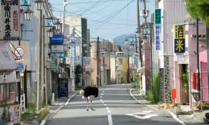 Η Φουκουσίμα μετά την καταστροφή (photos)