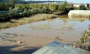 Σέρρες: Κινδυνεύει να πλημμυρίσει κτηνοτροφική μονάδα