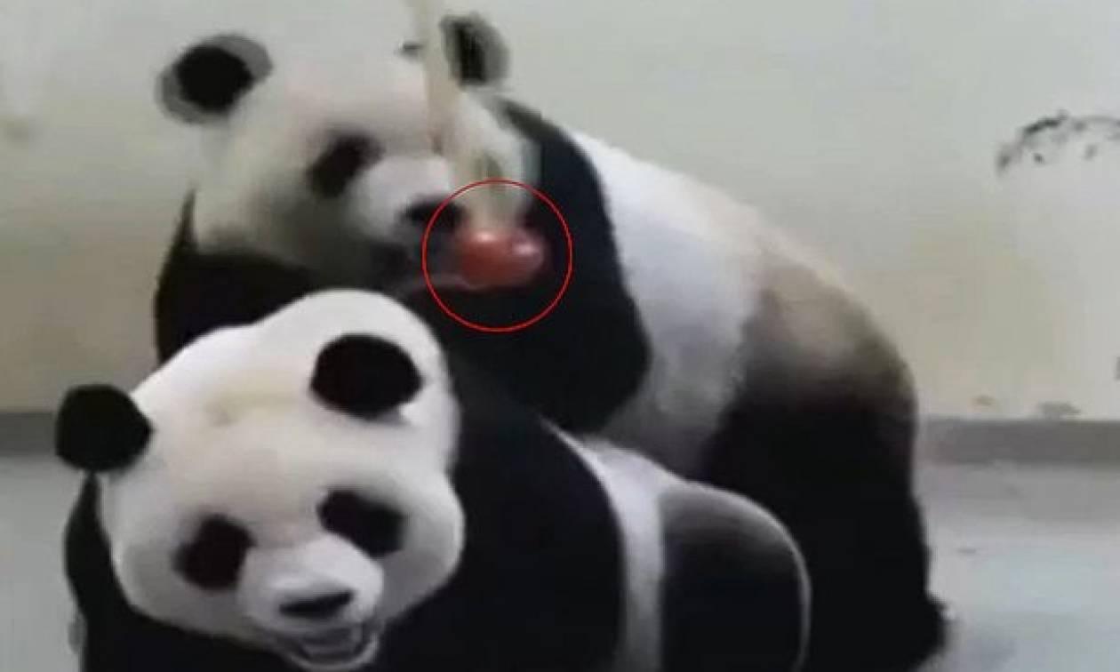 Ταϊβάν σεξ βίντεο