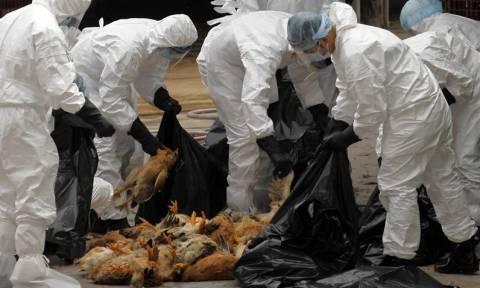 Μπουρκίνα Φάσο: Επέστρεψε ο εφιάλτης της γρίπης των πτηνών