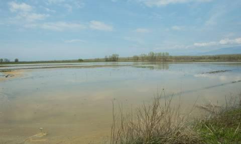 Σέρρες: Στις πλημμυρισμένες εκτάσεις ο ευρωβουλευτής του ΣΥΡΙΖΑ Κ. Χρυσόγονος