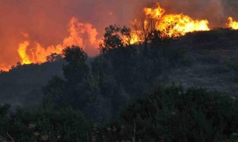 Σάμος: Λιγότερες οι πυρκαγιές το 2014 σε σχέση με προηγούμενα έτη