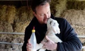 Βρετανία: Τα φιλιά του Κάμερον σε ένα… αρνάκι! (video & pics)