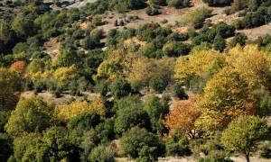 Έκλεβαν δένδρα από χωράφια στη Βέροια