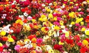 Πρέβεζα: 1η γιορτή λουλουδιών από το Καρναβαλικό Κομιτάτο