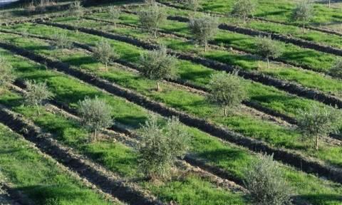 Πληρωμές 51,5 εκατ. ευρώ σε 107.734 αγρότες