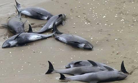 Νεκρά 146 δελφίνια στις ιαπωνικές ακτές (video & pics)