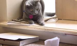 Το πρώτο καφέ με γάτες άνοιξε και μας περιμένει… στη Μόσχα! (video & pics)