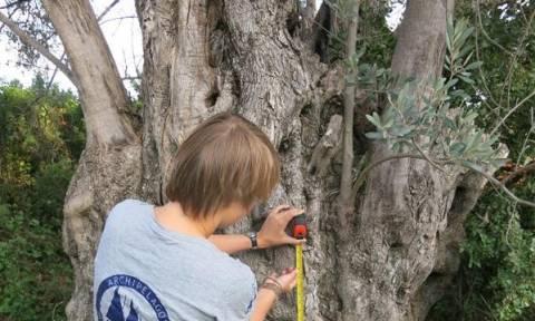 Αρχαία δέντρα του Αιγαίου: Μνημεία της φύσης