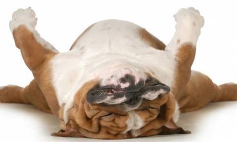 Είναι αυτός ο πιο τεμπέλης σκύλος του κόσμου; (Video)