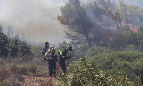 Στις φλόγες μεγάλη χορτολιβαδική έκταση στη Ξάνθη (Video)