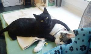 Ο μαύρος γάτος που κάνει το νοσοκόμο (photos)