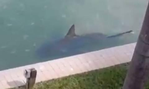 ΗΠΑ: Βρήκε έναν καρχαρία να κολυμπά στην αυλή της! (video)
