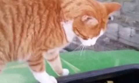 Σοκ: Κτηνίατρος φωτογραφίζεται περήφανα με τη γάτα που σκότωσε με τόξο