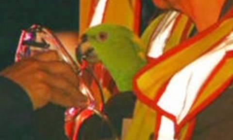 Παπαγάλοι σώθηκαν από τις φλόγες φωνάζοντας «βοήθεια»! (pics)