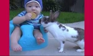 Αυτό το μωρό συναντά ένα κουνελάκι! Η συνέχεια θα σας κάνει να ξεκαρδιστείτε!