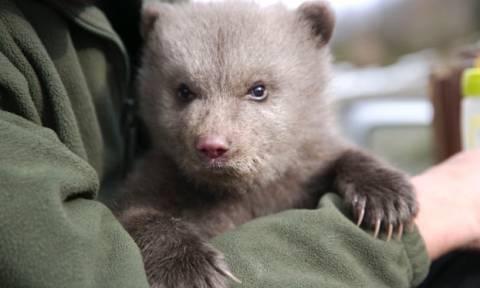 H iSquare υποστηρίζει την ανατροφή του Πάτρικ, της ορφανής αρκούδας του ΑΡΚΤΟΥΡΟΥ