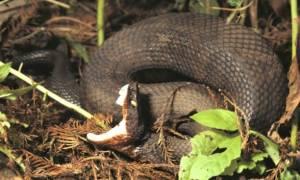 Πήγε να... φιλήσει ένα δηλητηριώδες φίδι και δείτε πώς έγινε! (photo)