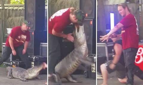 Σοκαριστικό βίντεο: Κροκόδειλος επιτέθηκε στον εκπαιδευτή του!
