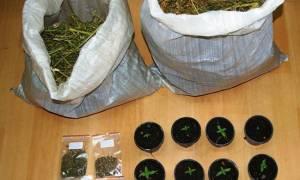 Ορεστιάδα: Δύο συλλήψεις για κατοχή και καλλιέργεια κάνναβης