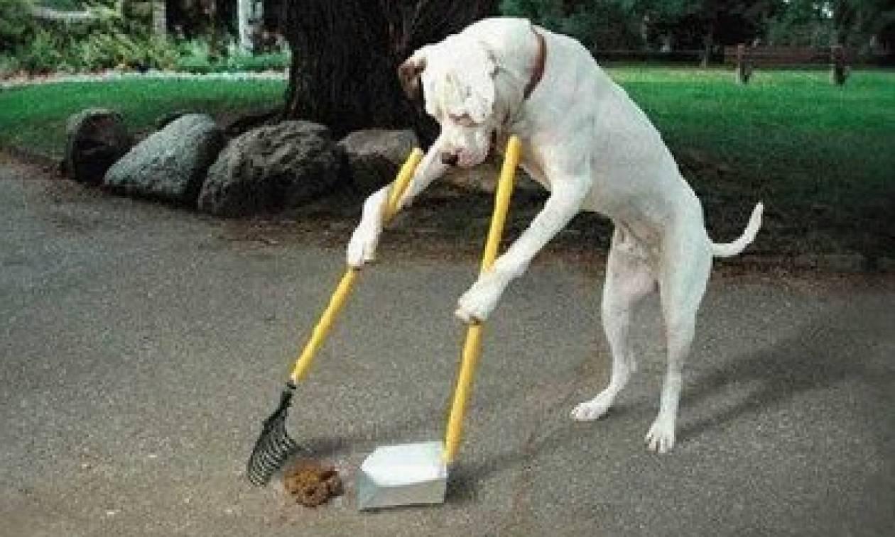 Λονδίνο: Έτσι θα… συλλαμβάνονται όσοι δεν μαζεύουν τα περιττώματα των σκύλων τους!