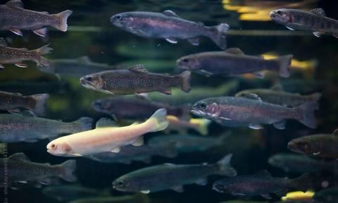 Ήπειρος: Απαγόρευση αλιείας στα ποτάμια