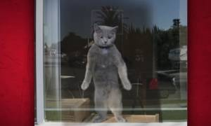 Ιron Cat για γερά νεύρα μόνο (video)