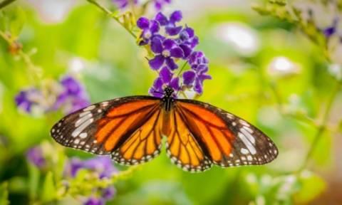 Οι τυχερές και όμορφες στιγμές της ημέρας: Δευτέρα 4 Μαΐου